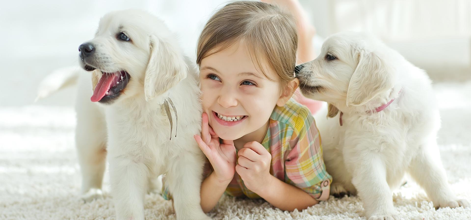 Pets And Rentals